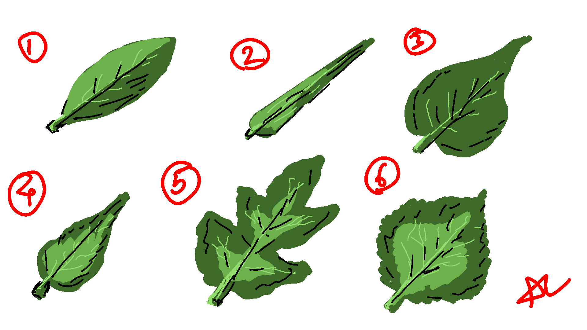 005_Leaves.png
