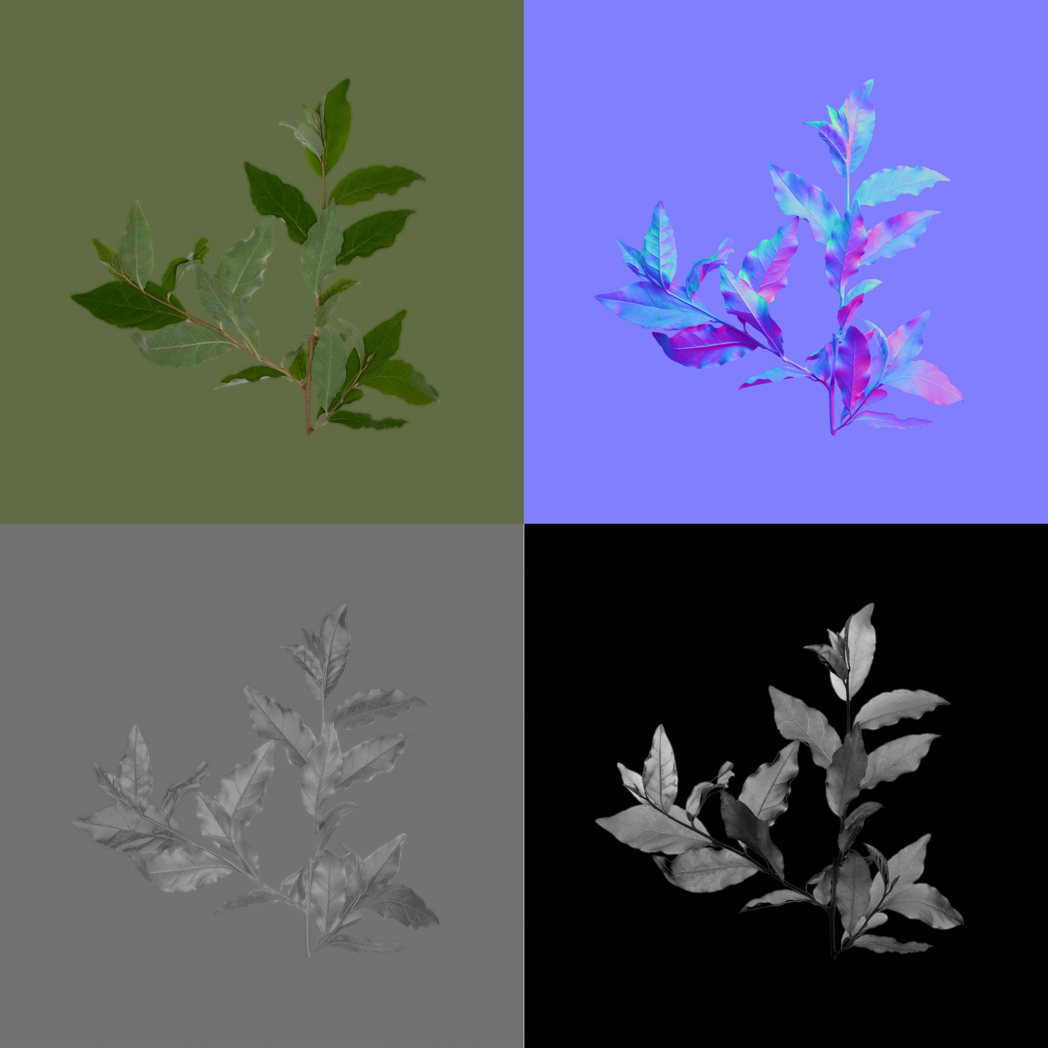 AutumnOliveBranchMedium01.jpg