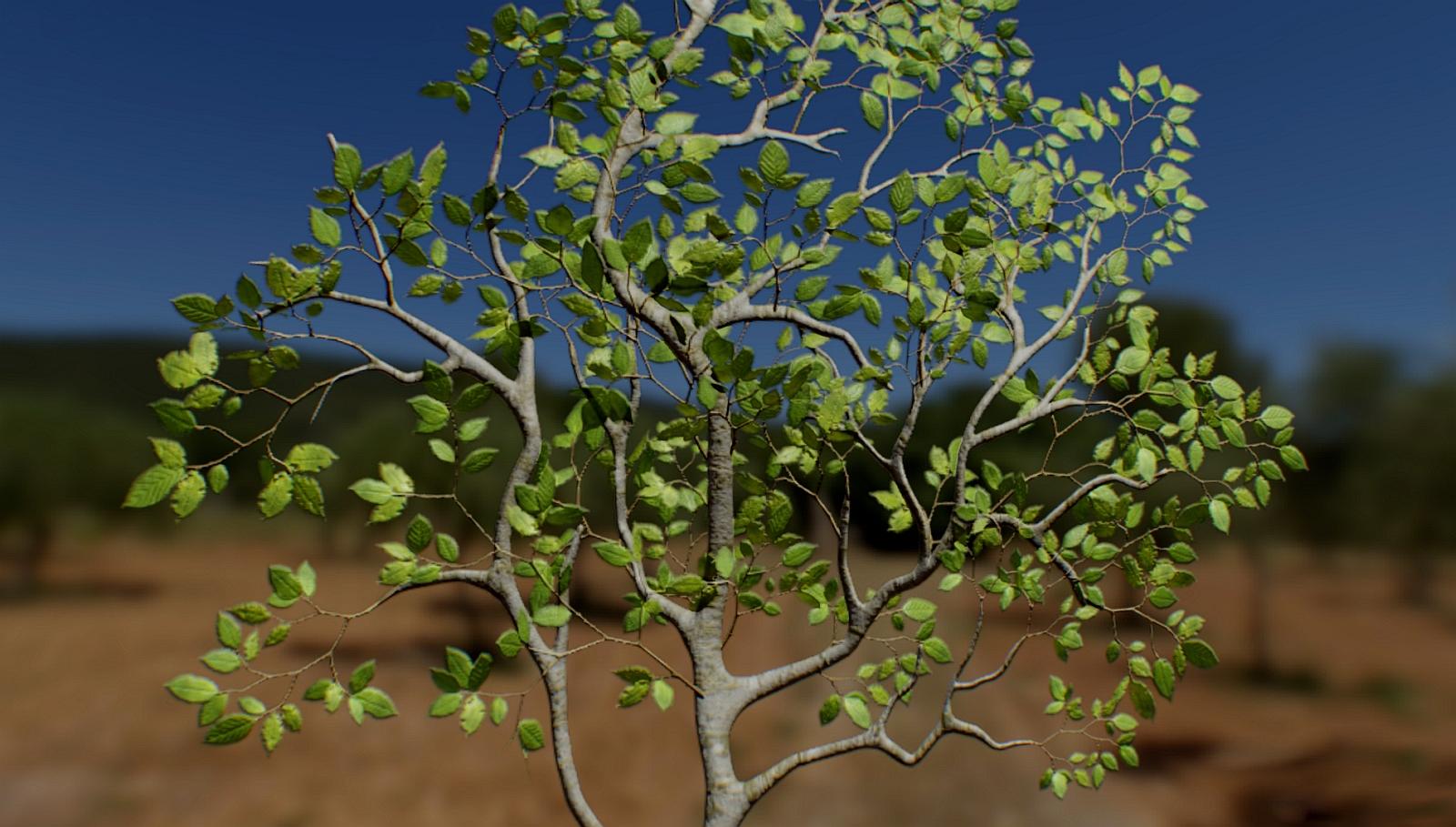 Beech Leaves 01.jpg