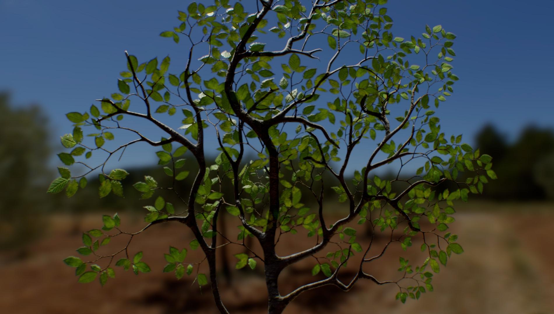 Beech Leaves 02.jpg