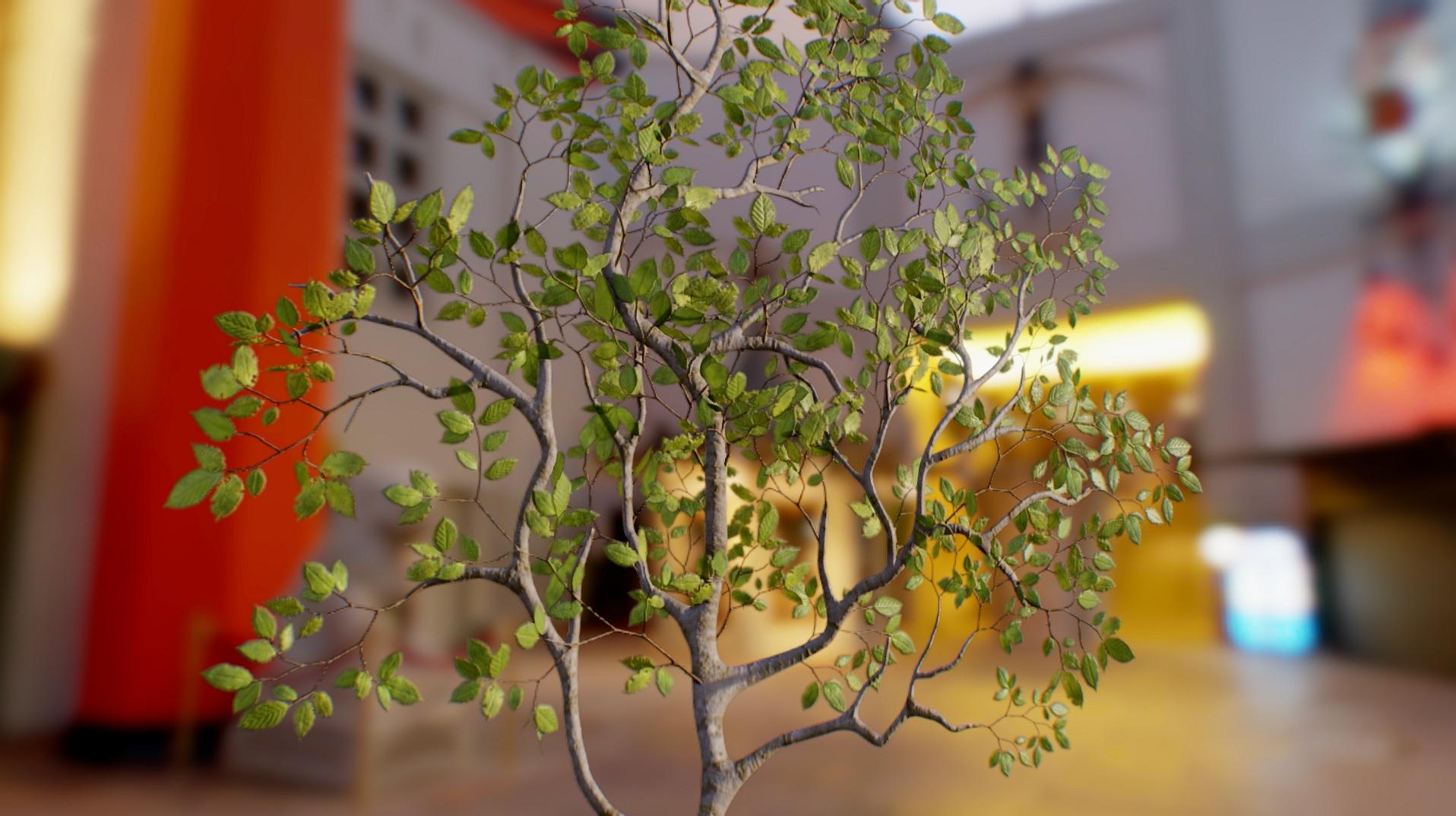Beech Leaves 03.jpg
