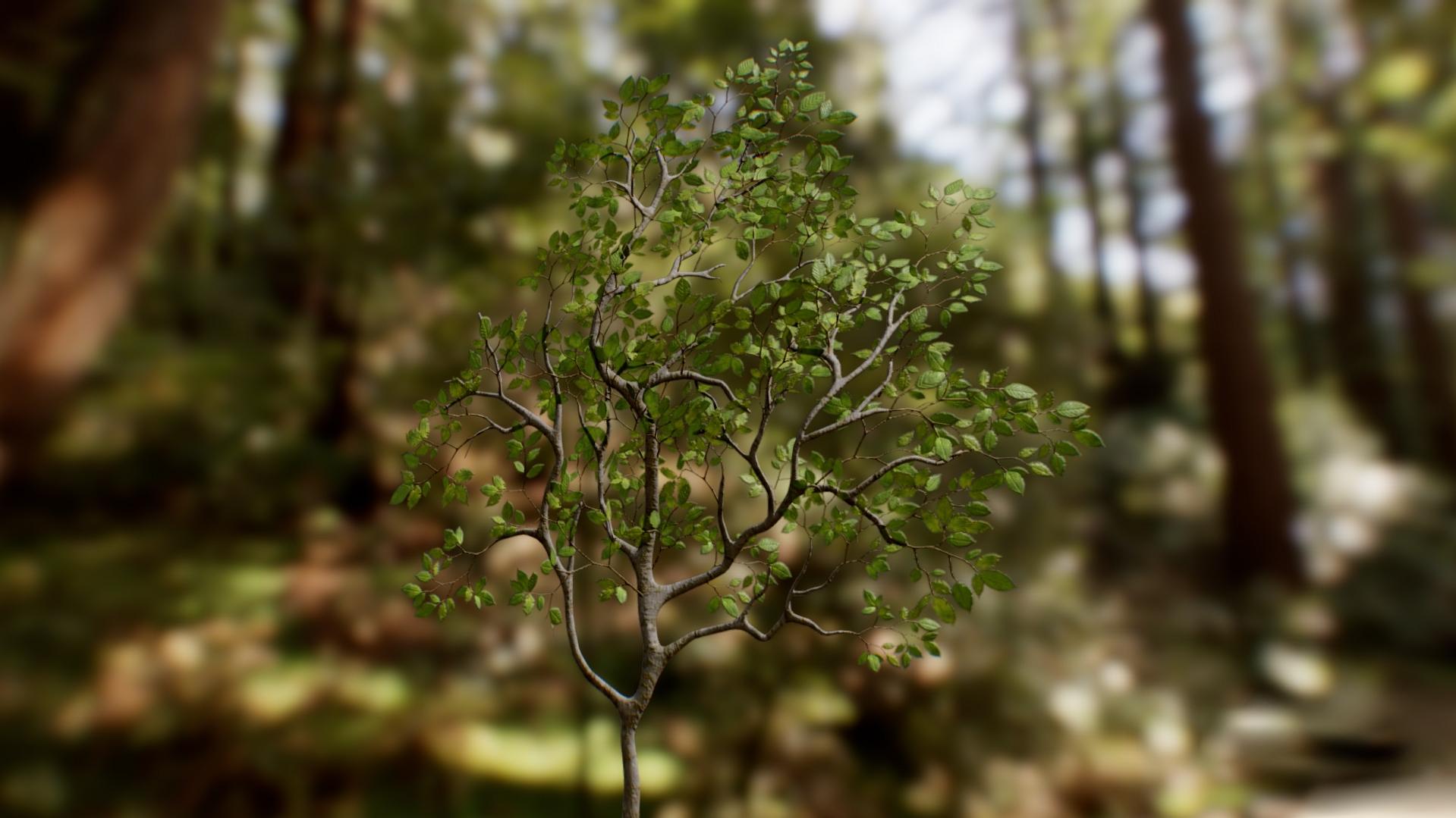 Beech Leaves 04.jpg