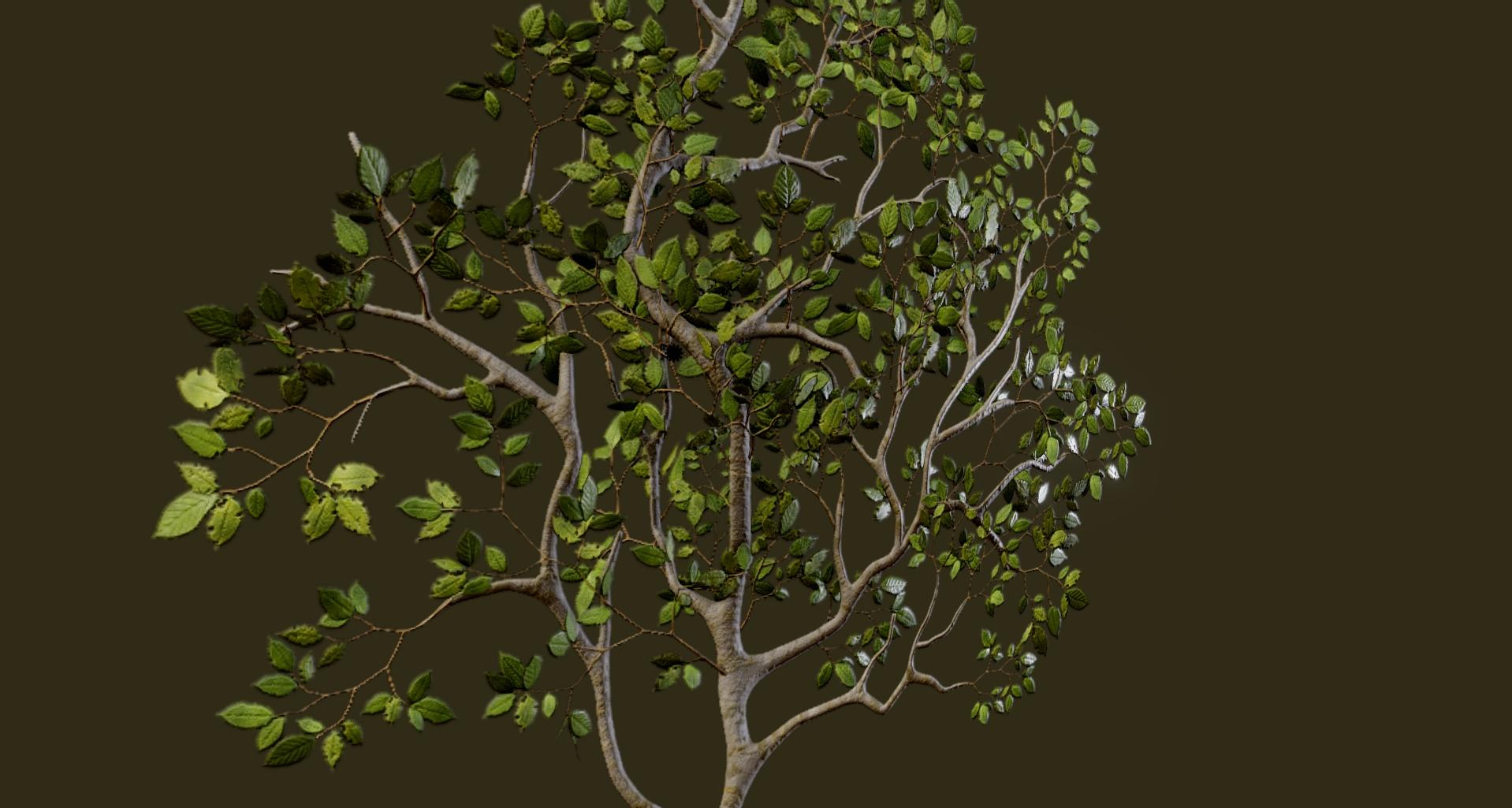 Beech Leaves 05.jpg