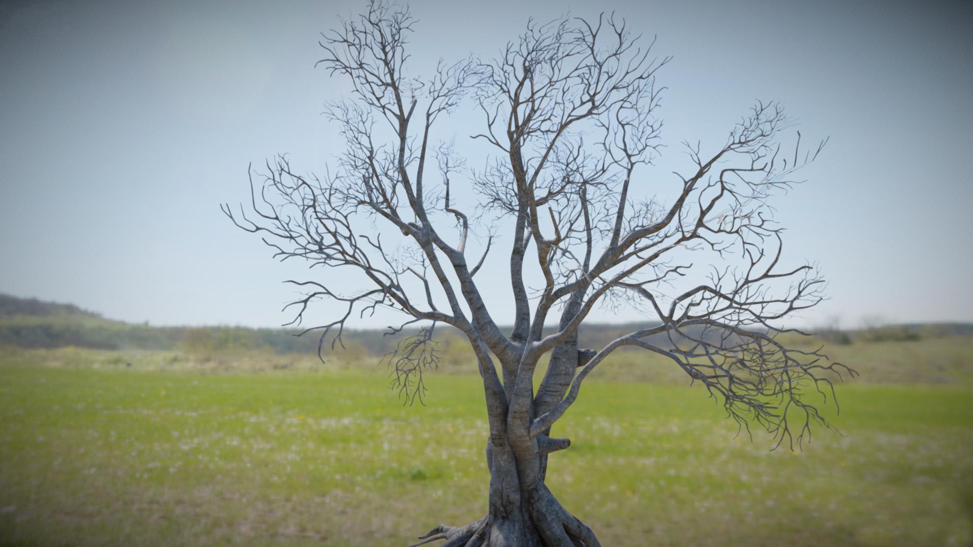 Beech Tree Final.jpg
