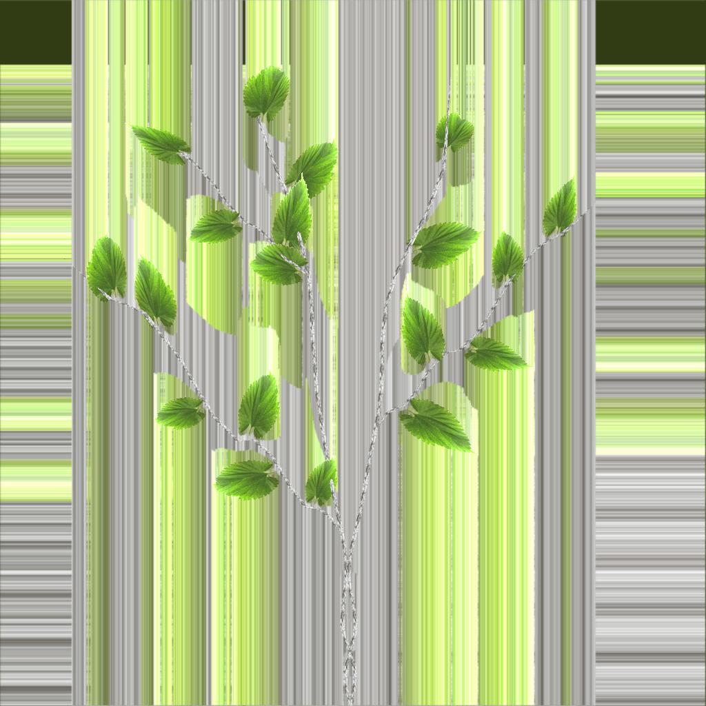 birch leaf 2.png