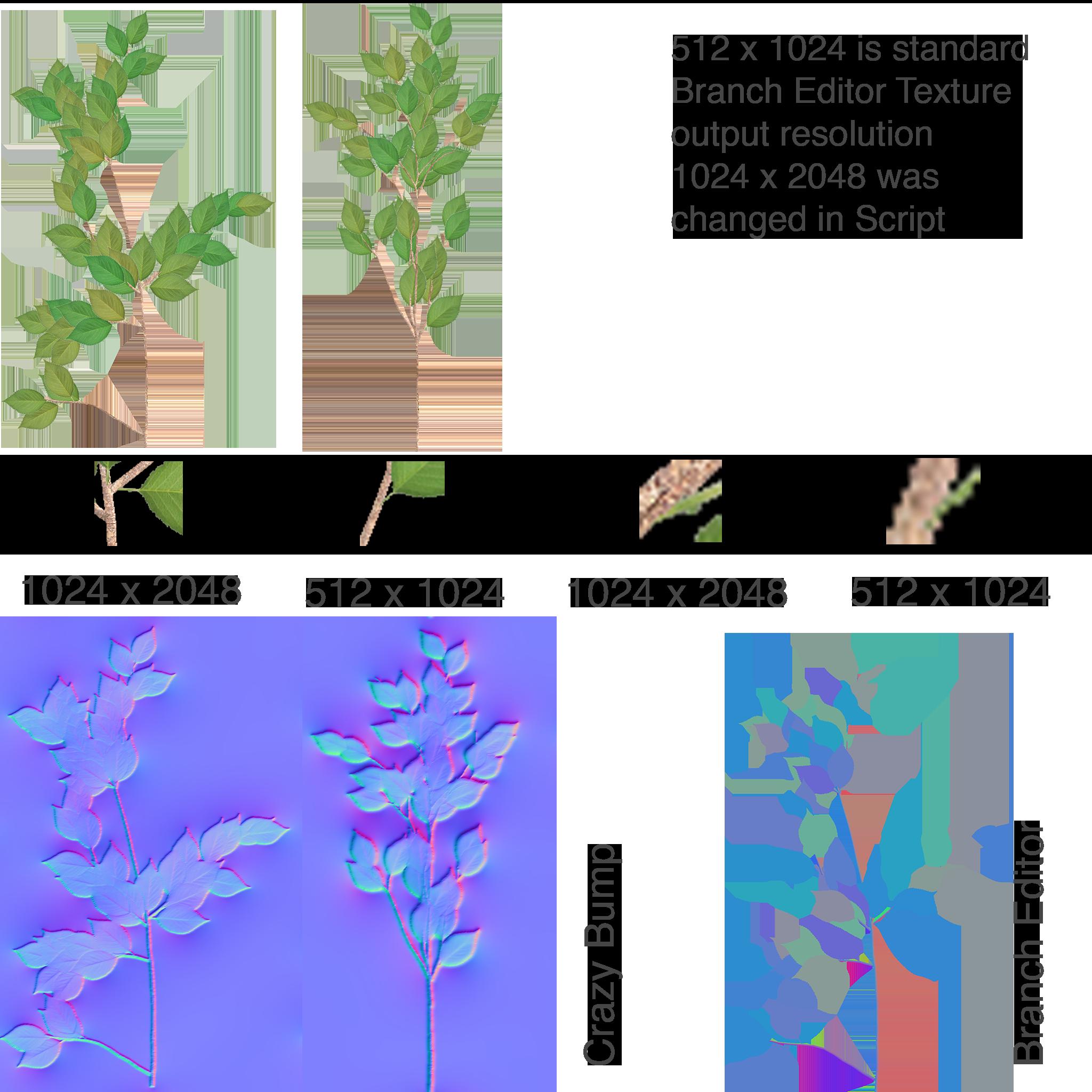 Branch Comparison.png