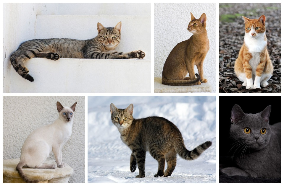 Cat_poster_2.jpg