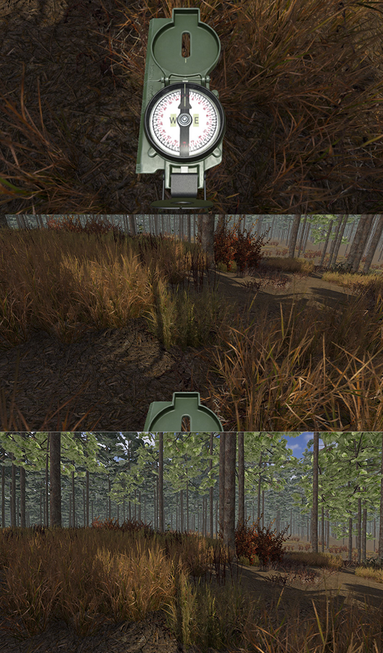 compass and trees.jpg