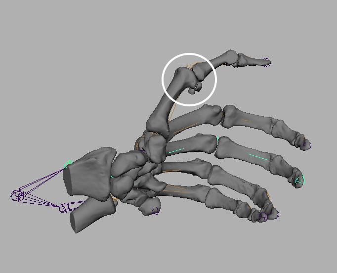 Maya Bone Animation issues - Unity Forum