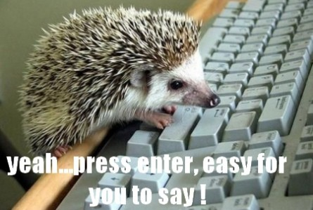$funny-hedgehog-on-computer-keyboard-445x299.jpg