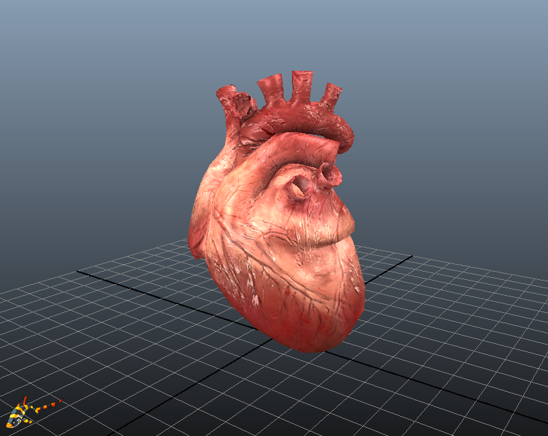 HUMAN HEART (animated) is now available - Unity Forum