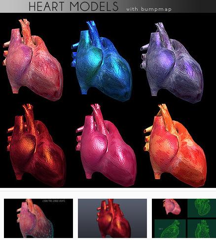 human heart picture g.jpg
