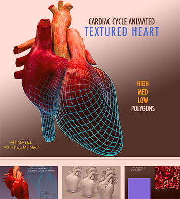 human heart picture h.jpg