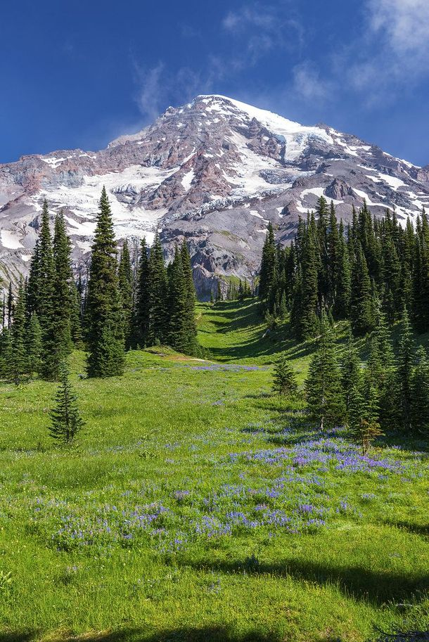 $mount-rainier-national-park-in-summer--30720.jpg