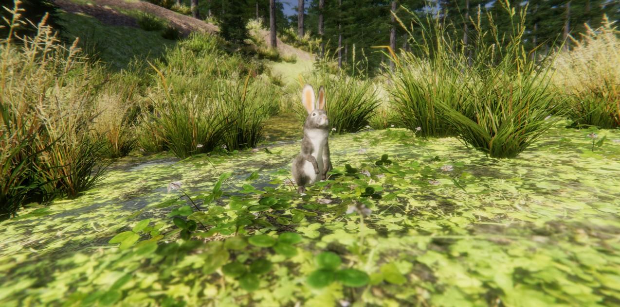 rabbit 01.jpg