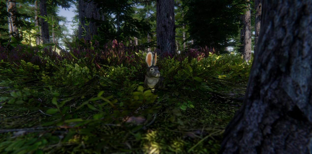 rabbit 02.jpg