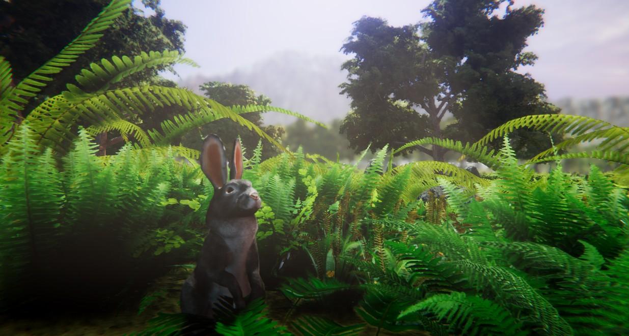 rabbit 1.jpg