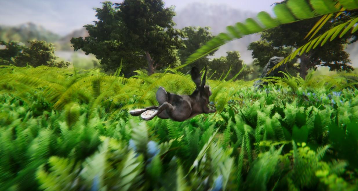 rabbit 3.jpg