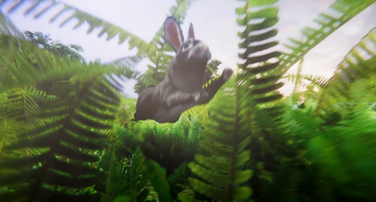 rabbit 4.jpg