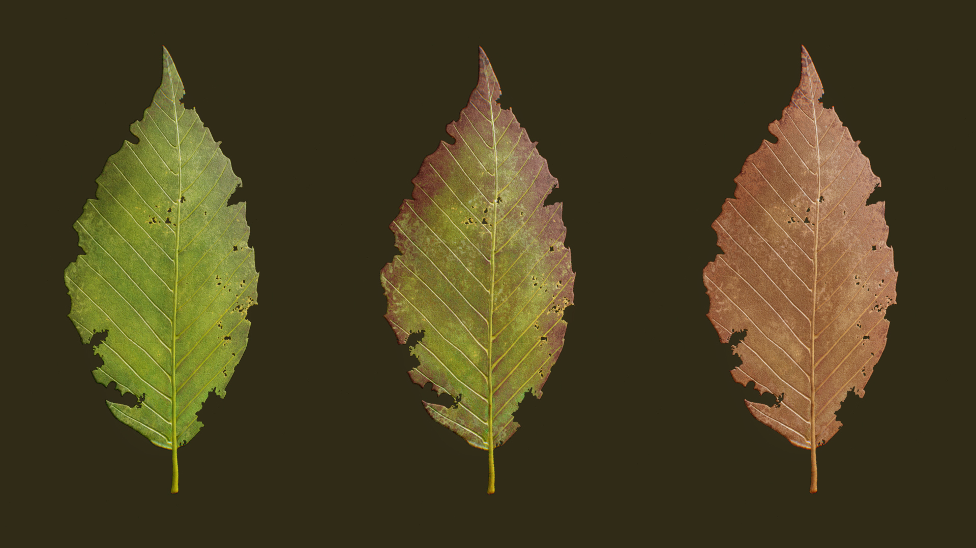 RHE_Leaves04.jpg
