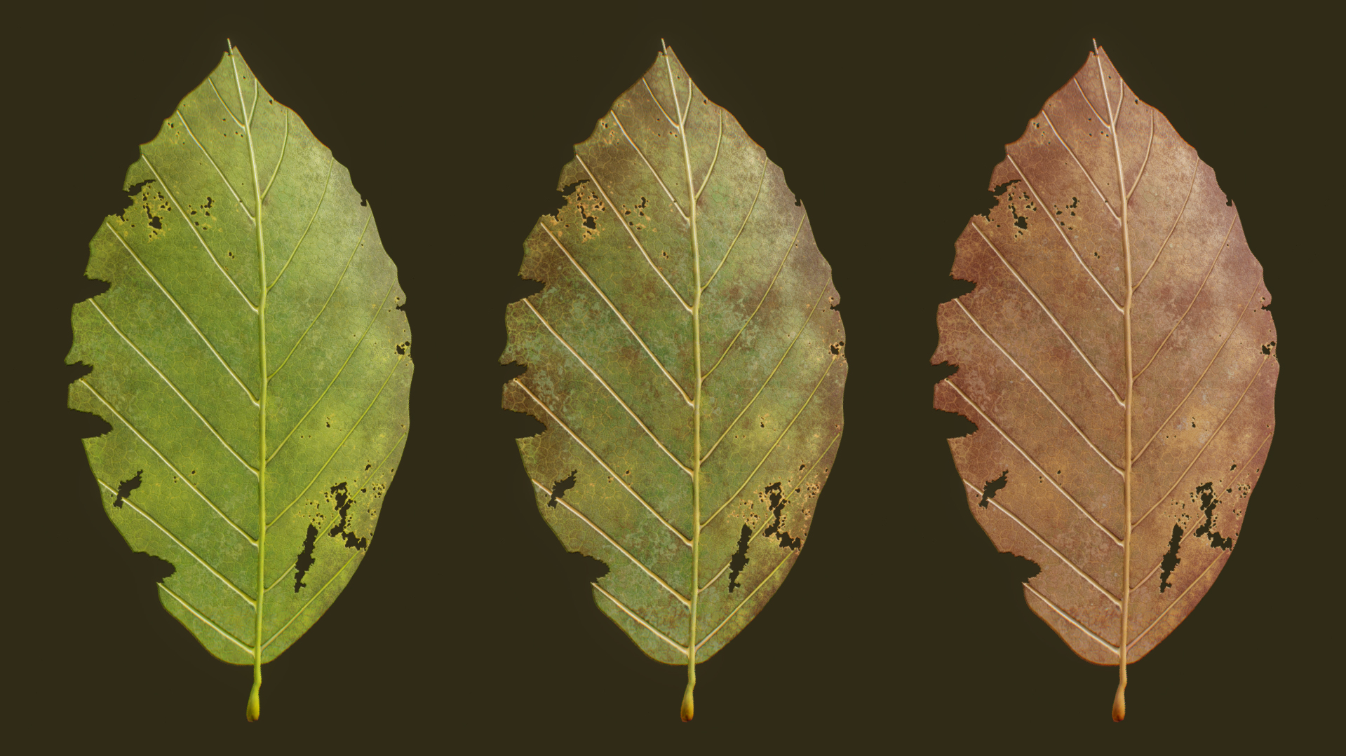 RHE_Leaves05.jpg