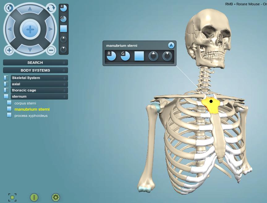 Interactive Anatomy - Unity Forum