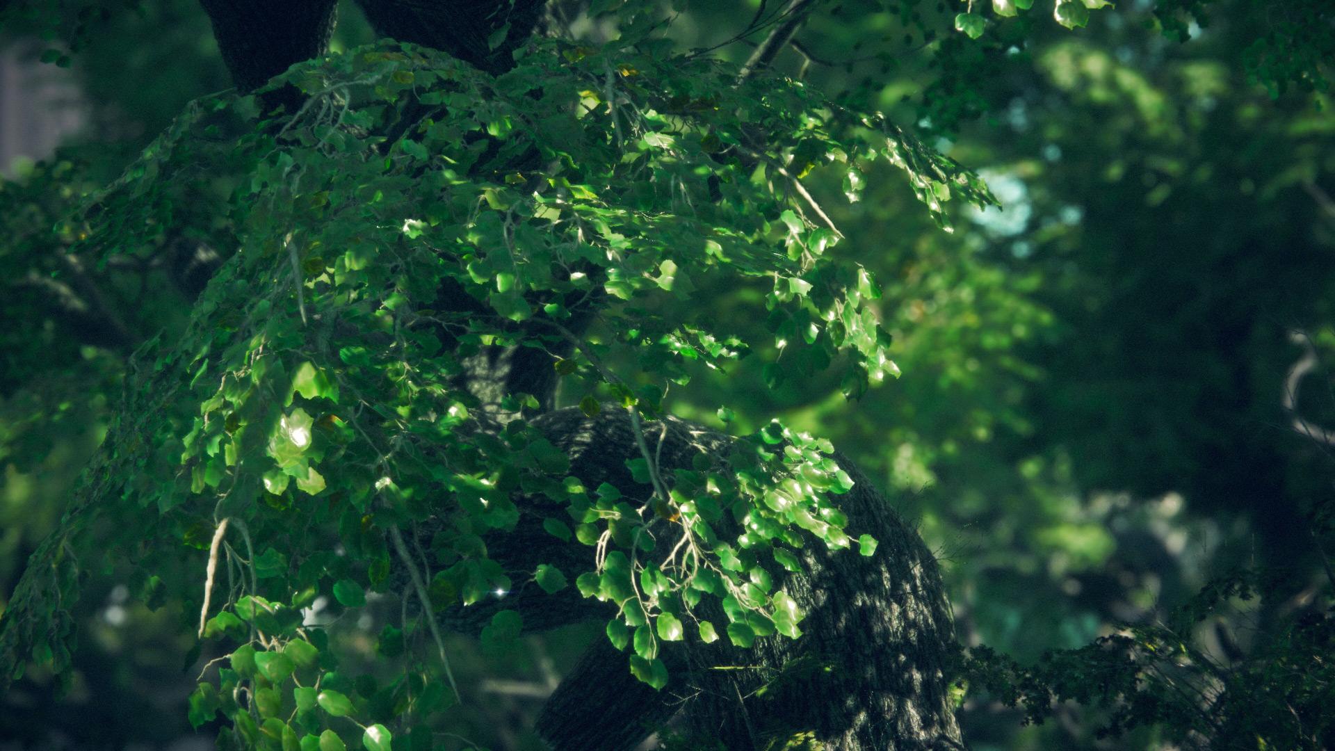 TreeDetail.jpg