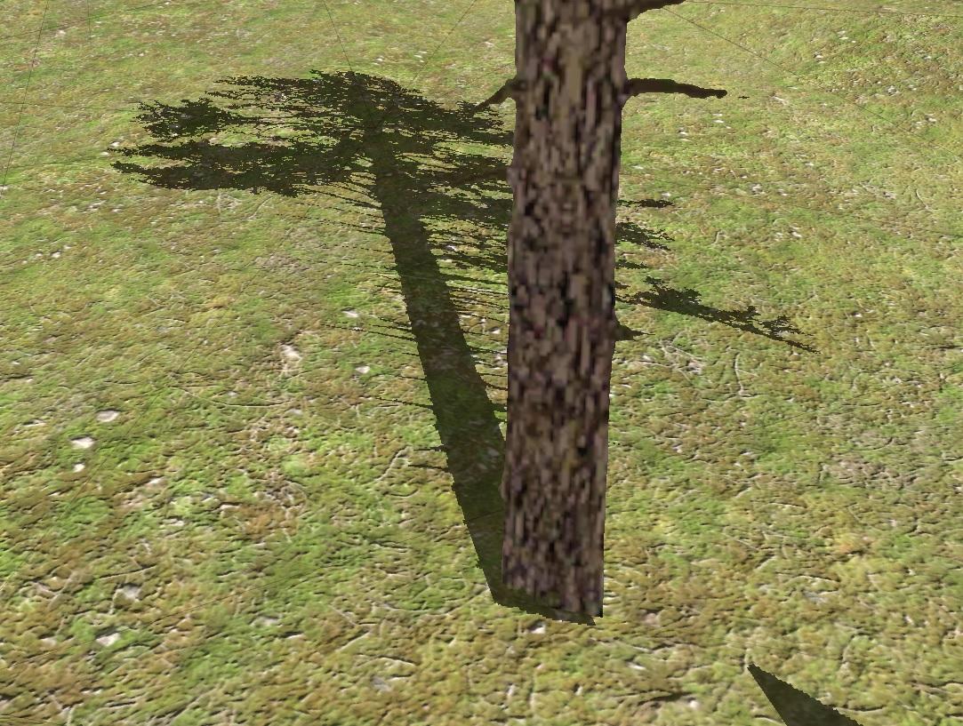 treereallights.jpg