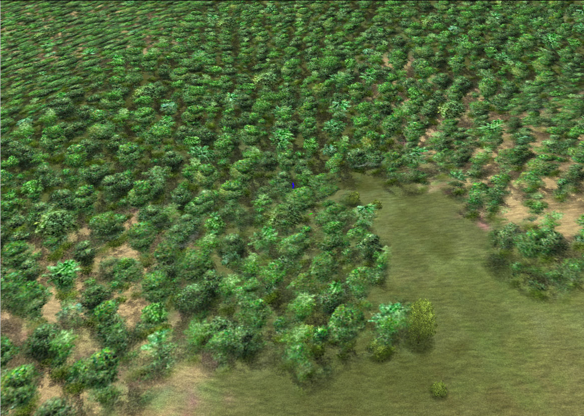 tropical_forest_il2.jpg