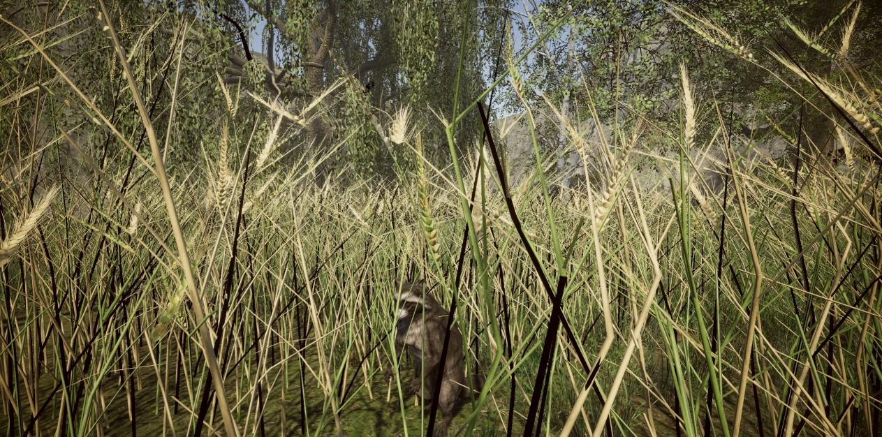wheat hdrp.jpg
