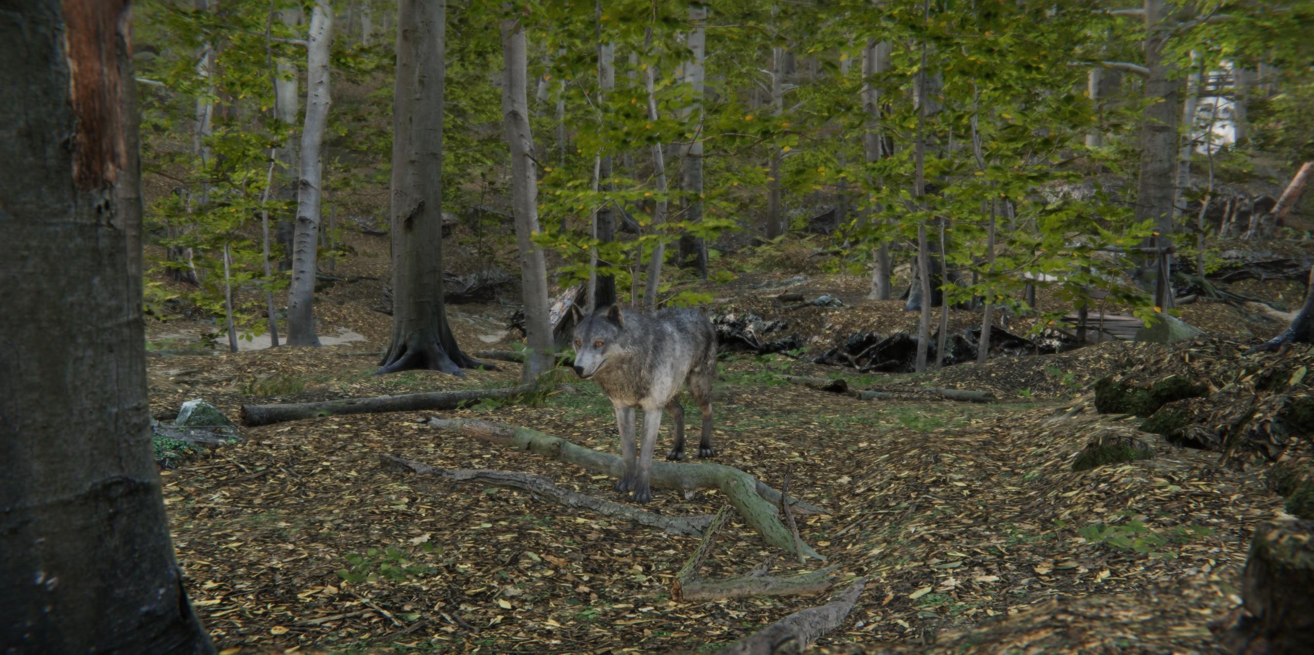 wolf 4.jpg