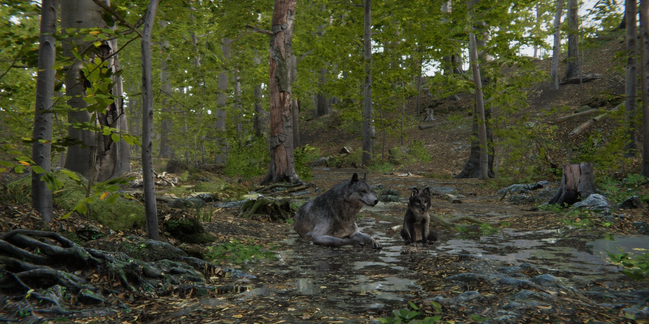 wolf 5.jpg